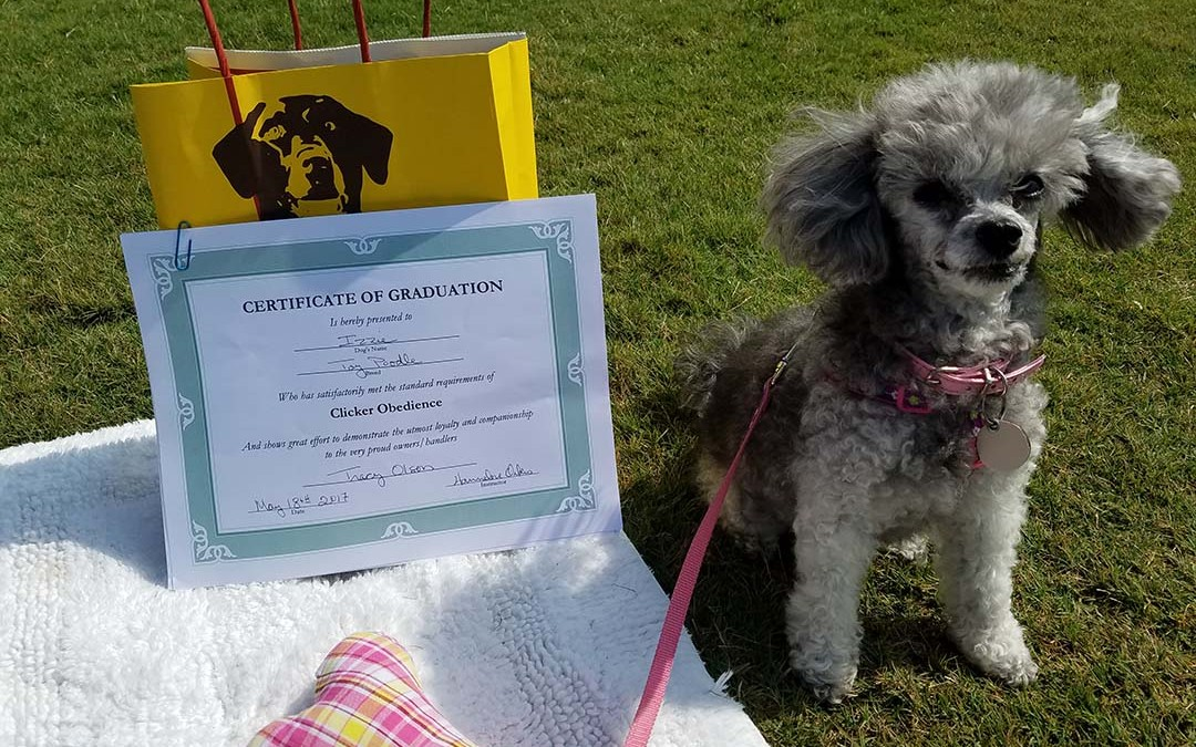 Izzie's Obedience School Graduation