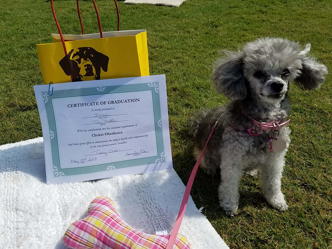 Izzie graduated from obedience school