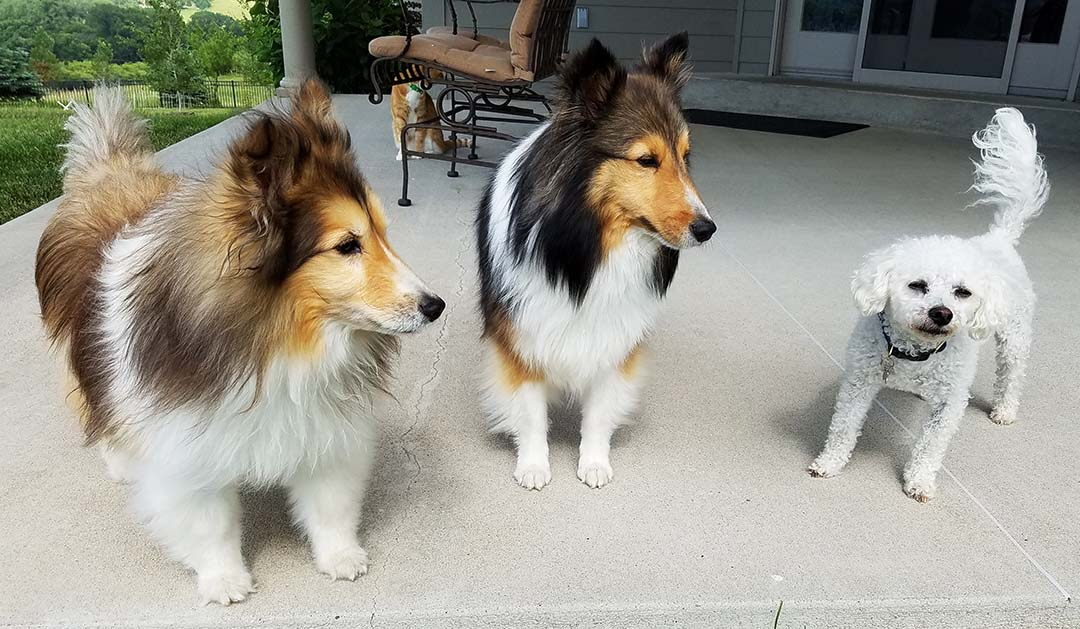 Quick trip to Iowa - Bailey, Luigi, Andy