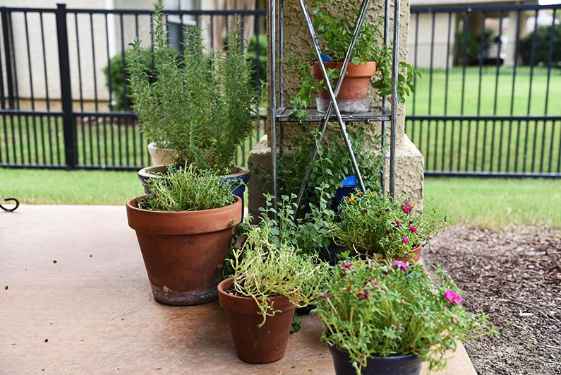 2017-08-23 Photos of My Flowers - More potted plants on the backporch