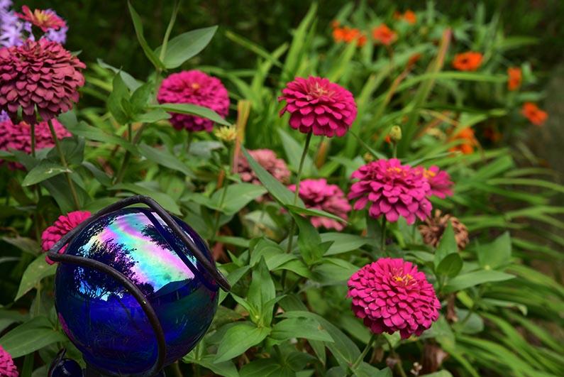2017-08-23 Photos of My Flowers - Zinnias and gazing ball