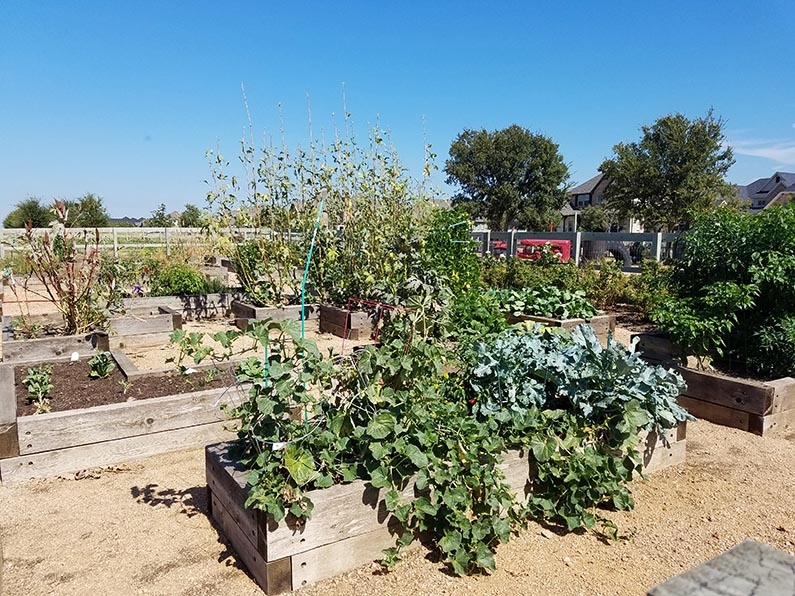 2017-10-18 Morning Coffee at Farmhouse Coffee & Treasures - resident garden boxes