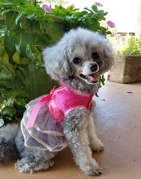 2017-11-22 Happy Thanksgiving - Izzie in her flower girl dress