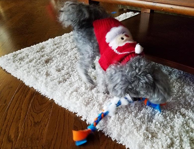 2017-12-30 Happy Holidays from Izzie - Bunny fur toy