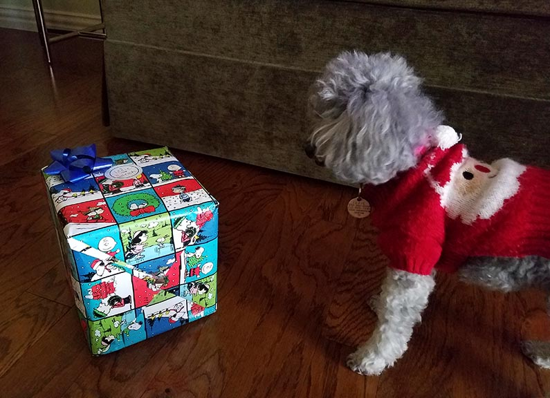 2017-12-30 Happy Holidays from Izzie - Looking at present