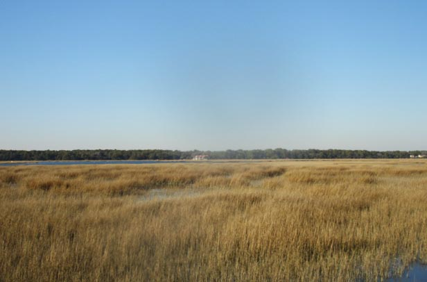 2018-02-01 Trip to Hilton Head Island SC - Broad Creek salt marsh