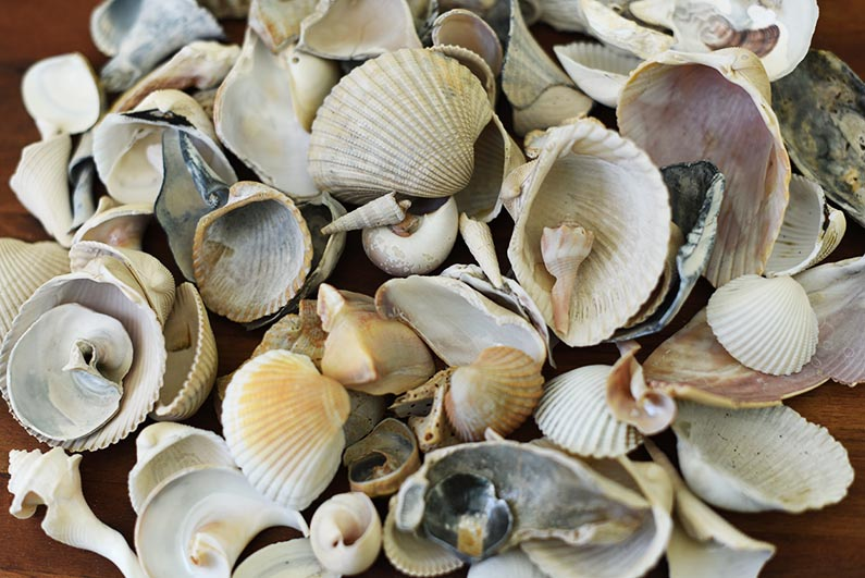 2018-02-01 Trip to Hilton Head Island SC - Sea shells