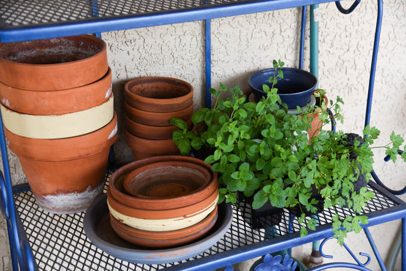 Happy Spring -herbs to be potted